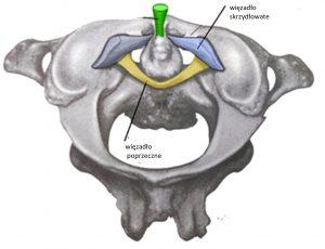 niestabilność górnych segmentów szyjnych