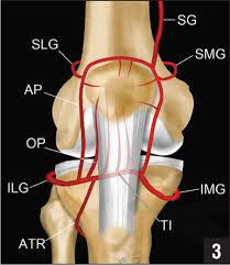 ból kolana ukrwienie