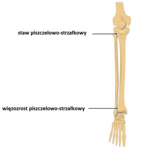 bol pobocznej stronie kolanakkk 284x300 - Ból pobocznej stronie kolana- jakie mogą być jego przyczyny?